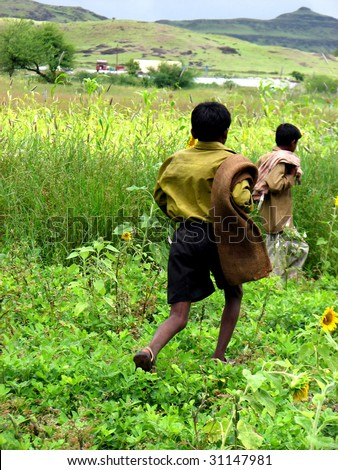 Indian farmer boys running in their sunflower and sugarcane fields.