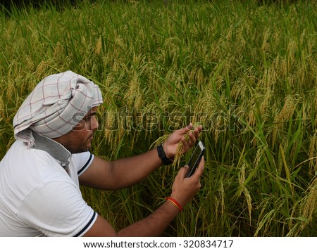 Indian Farmer checking growth of rice paddy farm and making call with smart phone, concept for technology help available to farmers in today's world