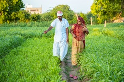 Indian farmer couple walking together in their agriculture green field inspecting the crop before harvesting. village life, copy space to write text.
