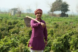indian farmer standing holding spade, agricultural field