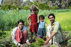 Indian farmer with family working in onion field, Maharashtra, India.