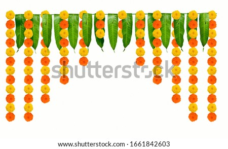 Indian flower garland of mango leaves and marigold flowers. Ugadi diwali ganesha festival poojas weddings functions holiday ornate decoration. Isolated on white background natural mango leaf garland