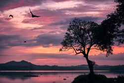 Indian fruit bats (species of flying foxes) on sky against moody sunset. Scary scene at dusk in Sri Lanka.