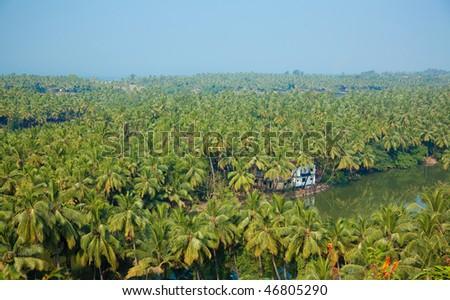 indian jungle landscape high top photo