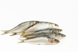 Indian Oil Sardines (Sardinella longiceps) on a white background