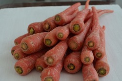 Indian red carrots. These carrots have extra antioxidants pigments that may benefit diseases like arthritis and many heart diseases. Carrots are rich in beta-carotene,lycopene and lutein content.