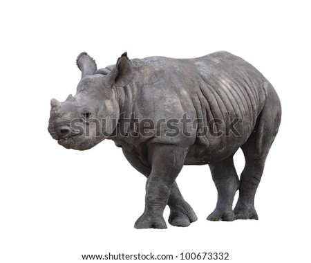 Indian rhinoceros (Rhinoceros unicornis) or one-horned Rhino is native to Nepal and India