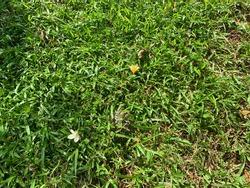 Indian Star Tortoise hiding in the green garden