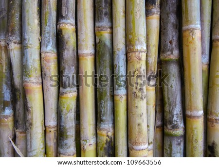 Indian sugar cane unpeeled