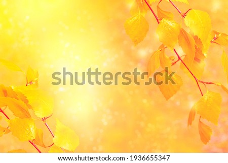 Indian summer. Beautiful autumn landscape with yellow trees and sun. Colorful foliage in the park. Falling leaves natural background.