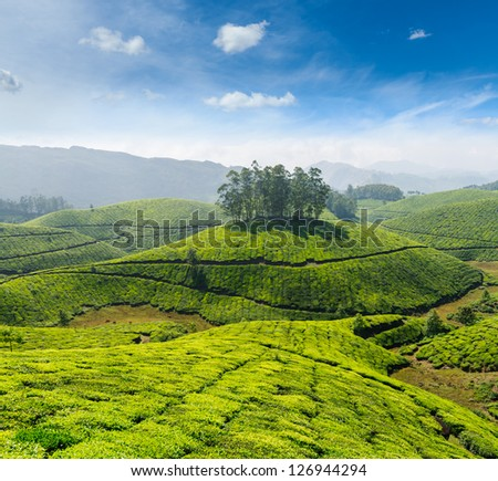 Indian tea concept background - tea plantations. Munnar, Kerala, India