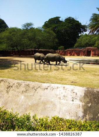 Indian wild animal rhino pic