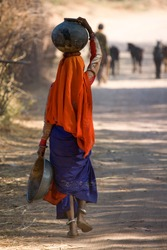 Indian woman walking home from the well with water carried in a pot on her head near Udaipur in India January 2007/Carrying water home in India