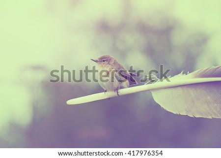 indie concept   warbler sits on ...