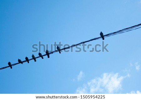 Individuality concept, independent thinker symbol, many pigeon birds on a wire with one individual in the opposition as a business icon. herd thinking