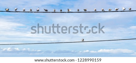 Individuality symbol, think out of the box, independent thinker concept, group of pigeon birds on a wire with one individual in the opposition as a business icon. Team collective above individual