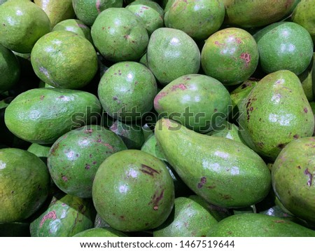 Indonesian ripe avocados that are ripe on the tree