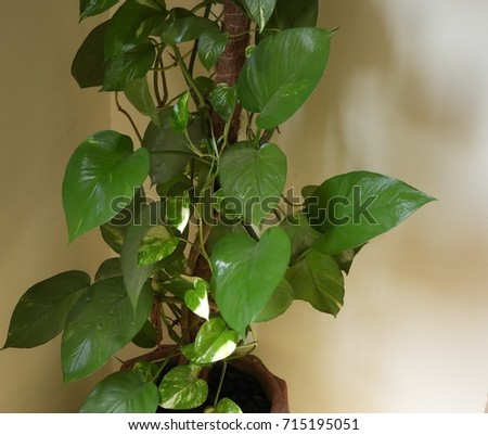 indoor decoration plants #715195051
