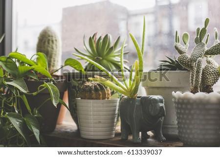 Indoor Garden in the Windowsill of an Apartment in Bushwick, Brooklyn #613339037