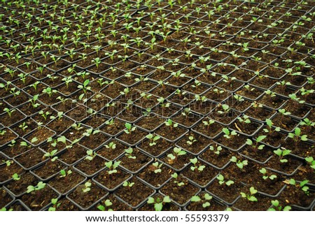 indoor growing little plants after sowing seeds - stock photo
