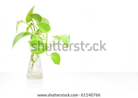 Indoor House plant isolated on a white background