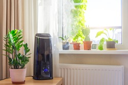 Indoor ornamental and deciduous plants on the windowsill and table in the apartment with a steam humidifier and thermometer to measure air temperature and humidity.