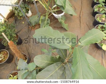 indoor plant for indoor garden, indoor house decorations and natural art #1508764916