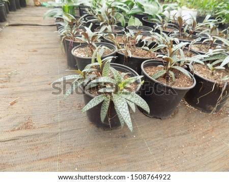 indoor plant for indoor garden, indoor house decorations and natural art #1508764922