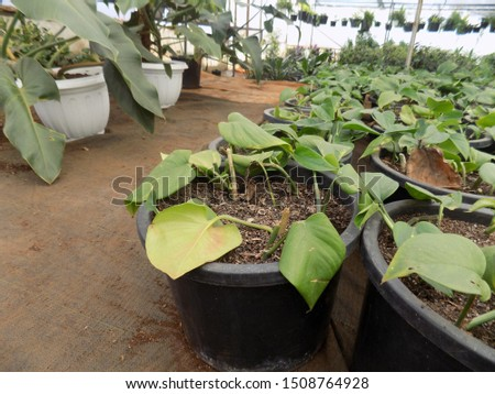 indoor plant for indoor garden, indoor house decorations and natural art #1508764928