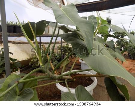 indoor plant for indoor garden, indoor house decorations and natural art #1508764934