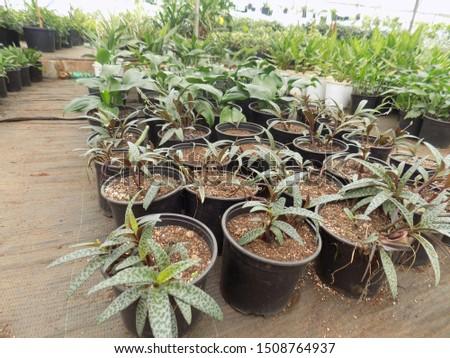 indoor plant for indoor garden, indoor house decorations and natural art #1508764937