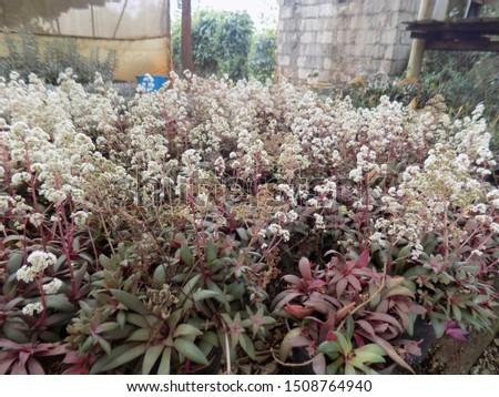 indoor plant for indoor garden, indoor house decorations and natural art #1508764940