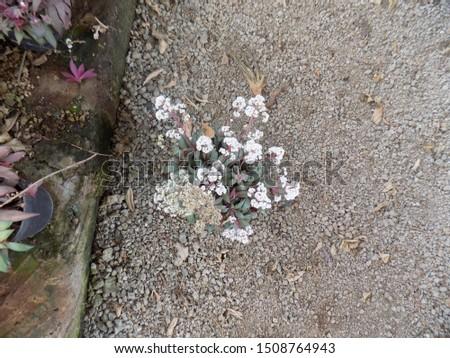 indoor plant for indoor garden, indoor house decorations and natural art #1508764943