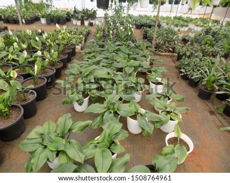 indoor plant for indoor garden, indoor house decorations and natural art #1508764961