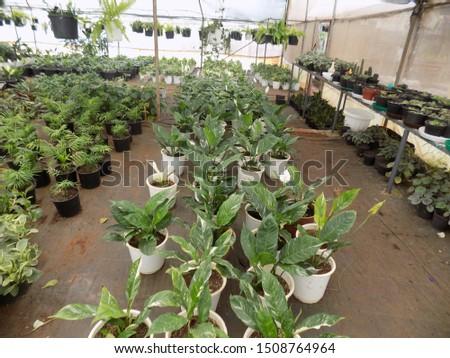 indoor plant for indoor garden, indoor house decorations and natural art #1508764964