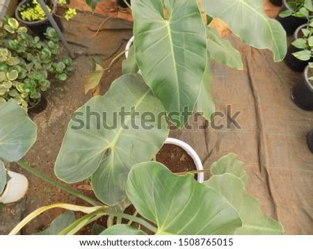 indoor plant for indoor garden, indoor house decorations and natural art #1508765015