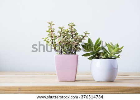 Indoor plant on wooden table and white wall #376514734