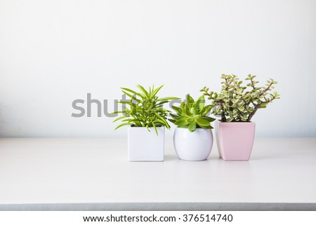 Indoor plant on wooden table and white wall - Shutterstock ID 376514740