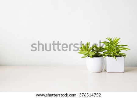 Indoor plant on wooden table and white wall