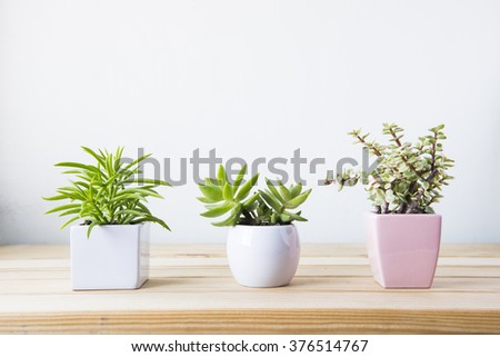 Indoor plant on wooden table and white wall #376514767