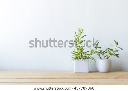 Indoor plant on wooden table and white wall - Shutterstock ID 437789368