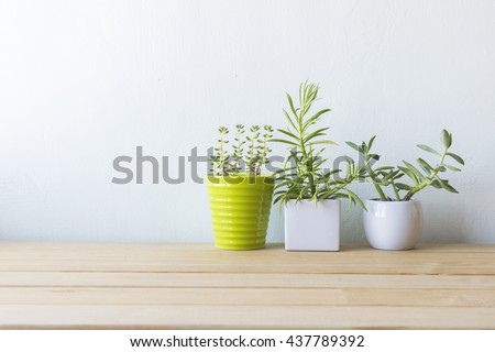 Indoor plant on wooden table and white wall #437789392