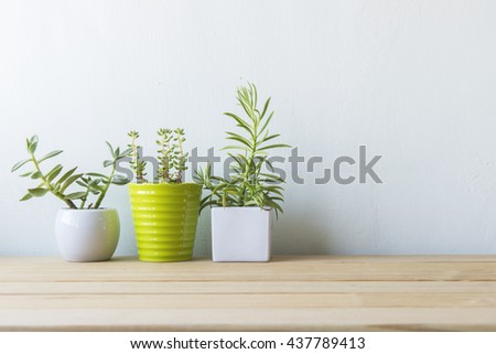Indoor plant on wooden table and white wall #437789413