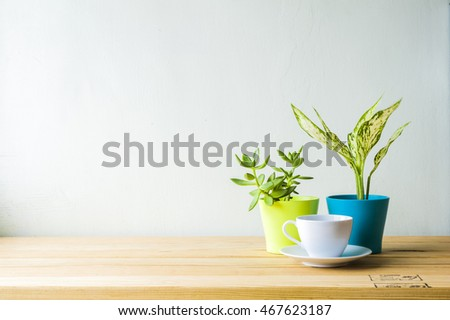 Indoor plant on wooden table and white wall #467623187