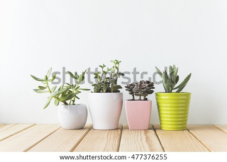 Indoor plant on wooden table and white wall #477376255