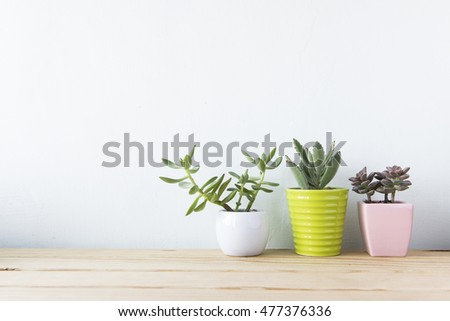 Indoor plant on wooden table and white wall #477376336