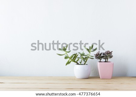 Indoor plant on wooden table and white wall #477376654