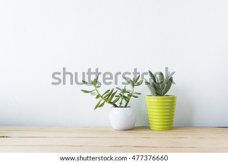 Indoor plant on wooden table and white wall #477376660