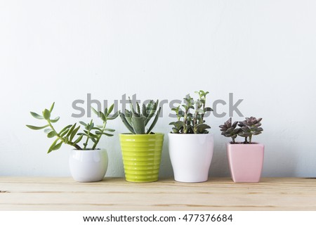 Indoor plant on wooden table and white wall #477376684
