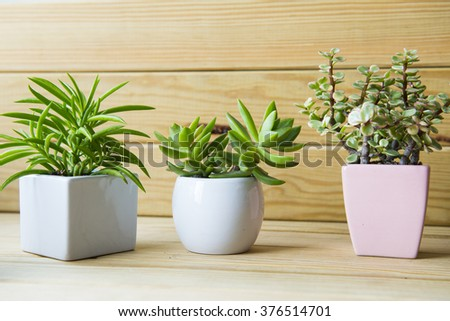 Indoor plant on wooden table and wooden wall #376514701